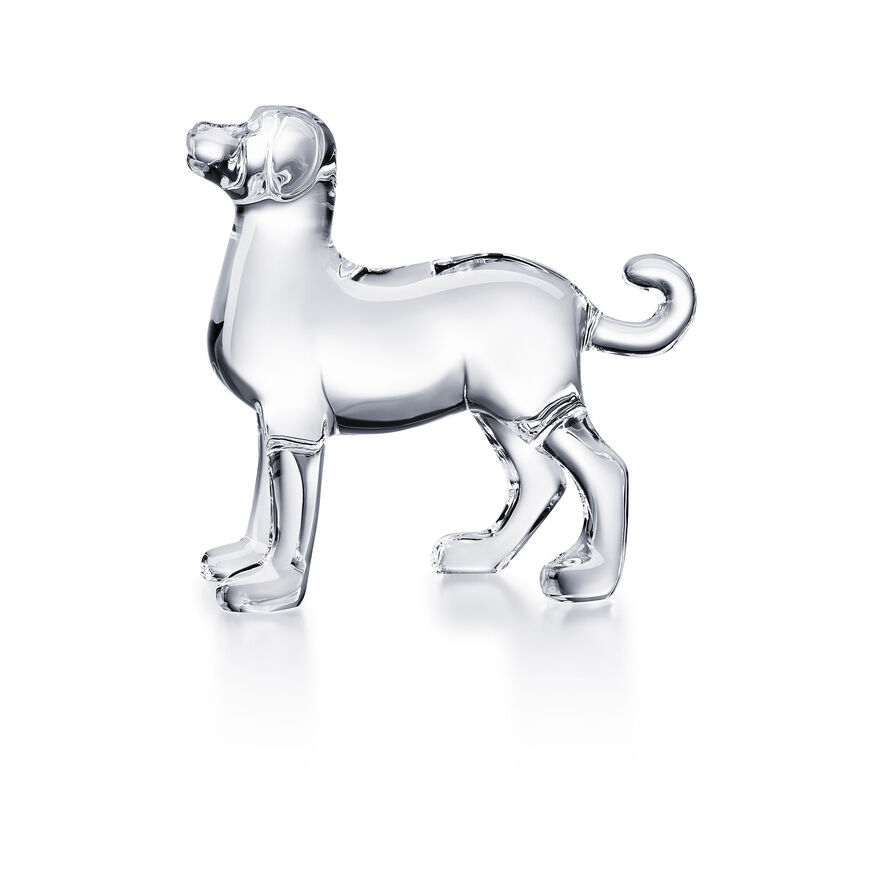 ZODIAQUE DOG, Clear