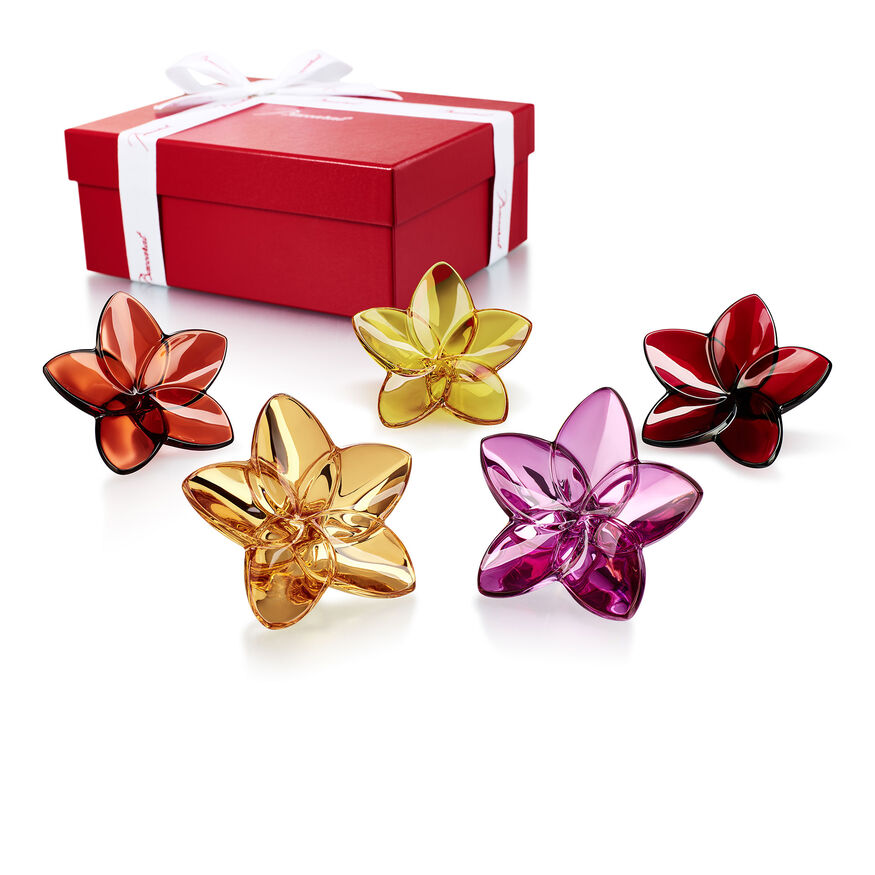 THE BLOOM COLLECTION FLOWER POWER,